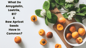 What Do Amygdalin, Laetrile, B17 and Raw Apricot Seeds Have In Common - Apricots in Bowl