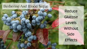Blood Sugar And Berberine - Oregon Grapes