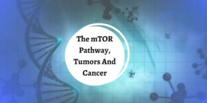 What Is The mTOR Pathway - Double Helix