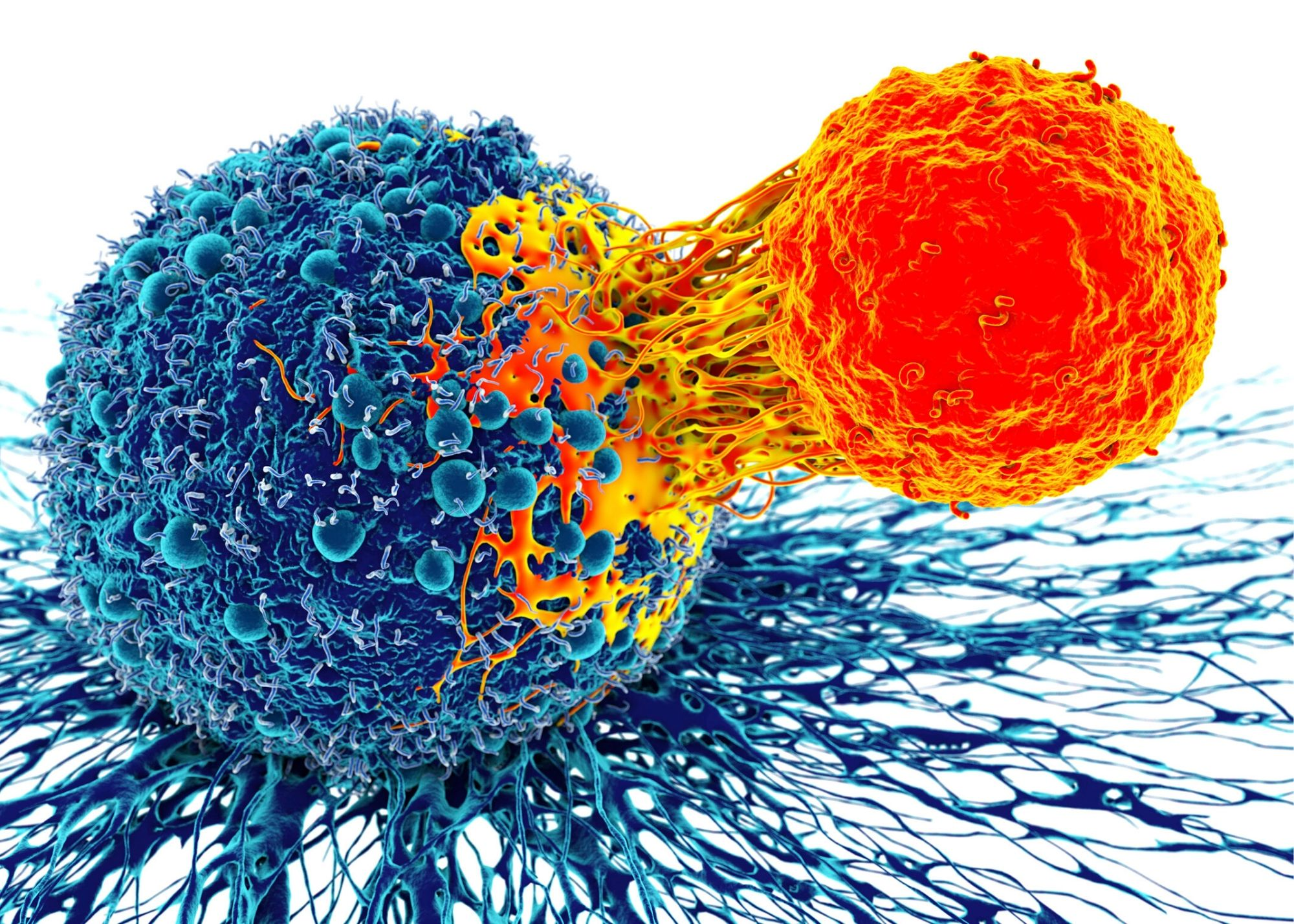 immune system cell