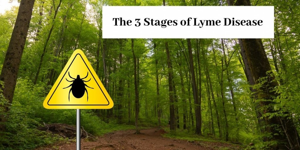 black tick on road sign in woods