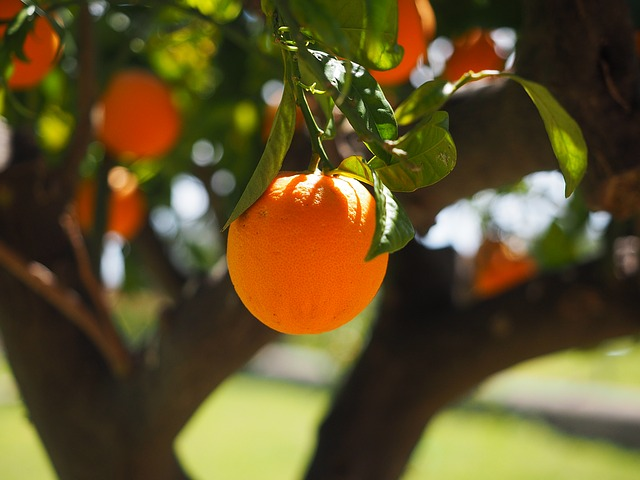 Treating The Flu From Home - Orange Tree